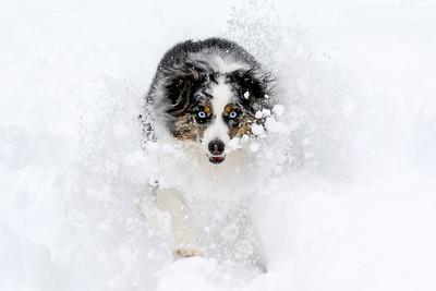 Luna's Snow Day
