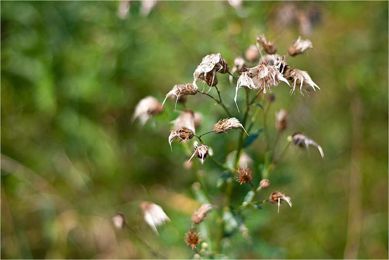 20110724_Flower4.jpg