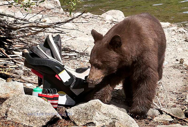 A Bear 3.jpg