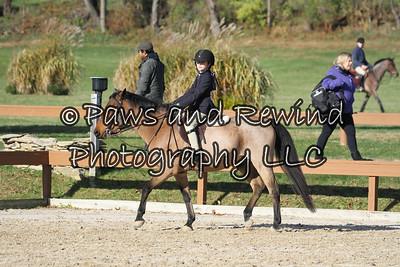 Hunter Ring: Short Stirrup Eq/Hunter Under Saddle