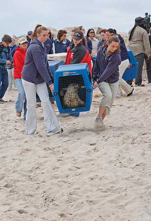 Seal Release 2007