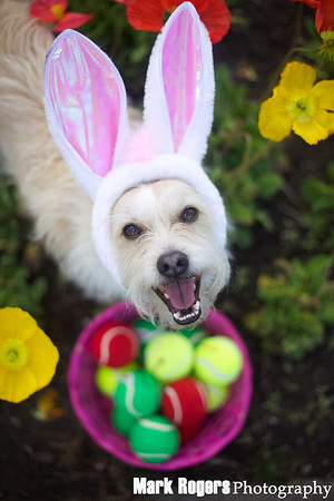 Bizzy Easter