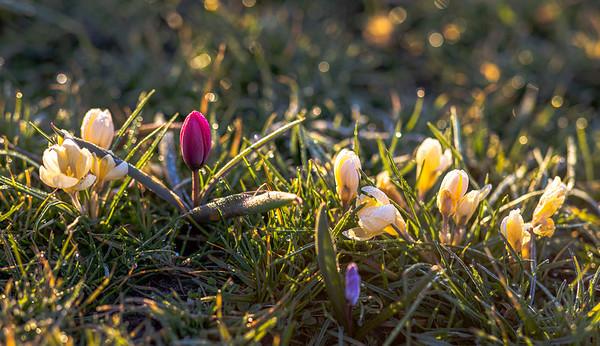 Radolfzell 16.03.2020 Blumen