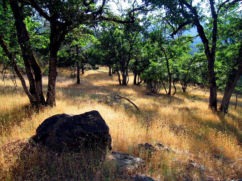golden grass and oaks.jpg