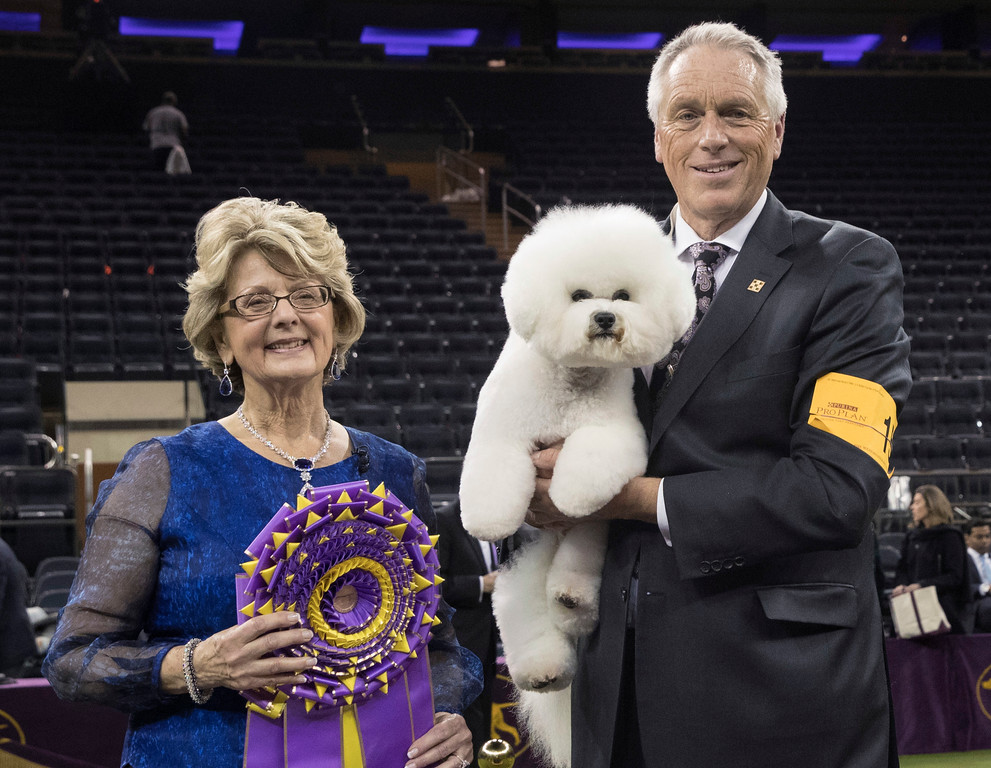 . Handler Bill McFadden, right, poses for photos with Flynn, a bichon frise, and judge Betty-Anne Stenmark after Flynn won best in show during the 142nd Westminster Kennel Club Dog Show, Tuesday, Feb. 13, 2018, at Madison Square Garden in New York. (AP Photo/Mary Altaffer)