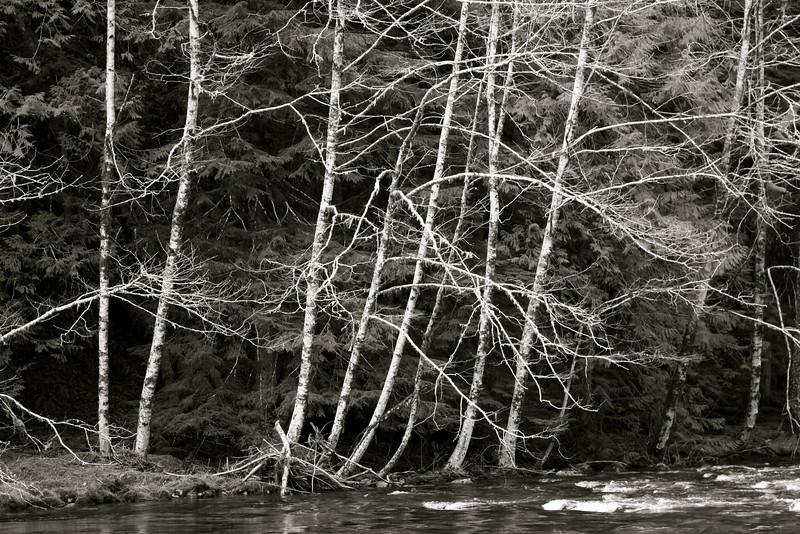 tree_15.jpg