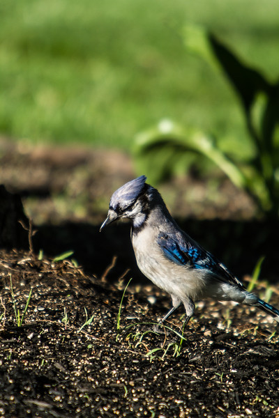 Birding_Rochester_061312_018.jpg