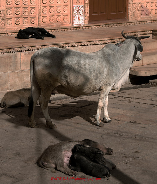 India2010-0209A-81A.jpg