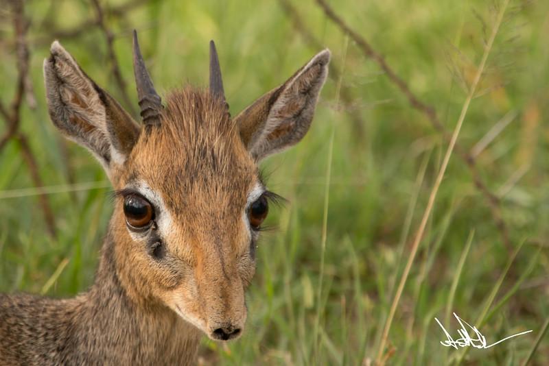 AntelopeS-10.jpg