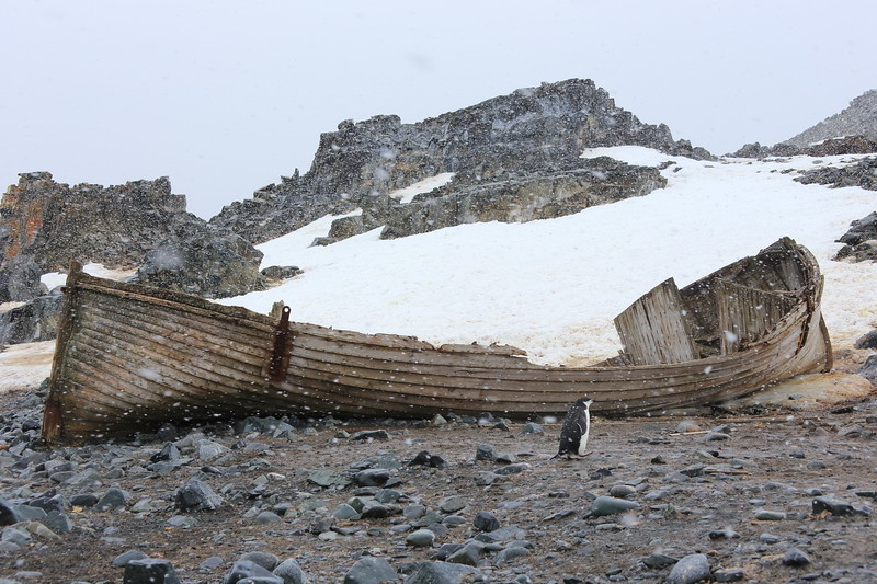 half-moon Island, South Shetlands, it's snowing and cold  http://www.ats.aq/siteguidelines/documents/Half_moon_e.pdf
