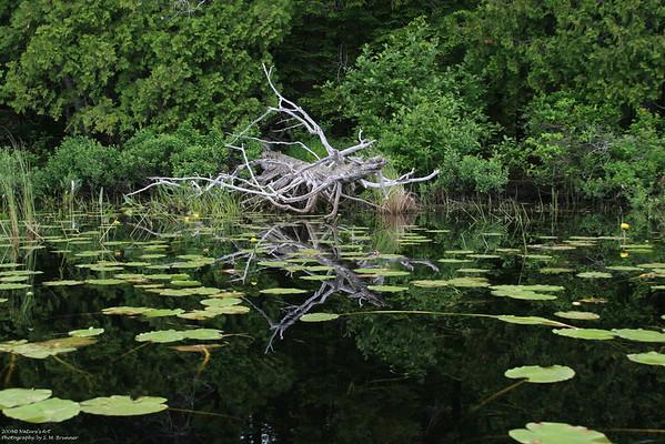 Gardiner Brook on Big Lake,Maine<br /> ©Nature'sArt