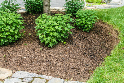 use-a-mower-to-break-fallen-leaves-into-great-mulch-for-your-soil