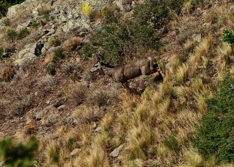 NEA_3195-7x5-Deer on the Move.jpg