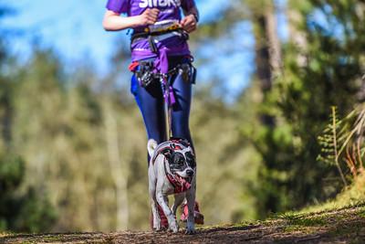 Resolution Run Anglesey - Canicross Runners