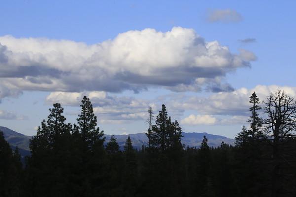 Gray Eagle, Lakes Basin June 2015
