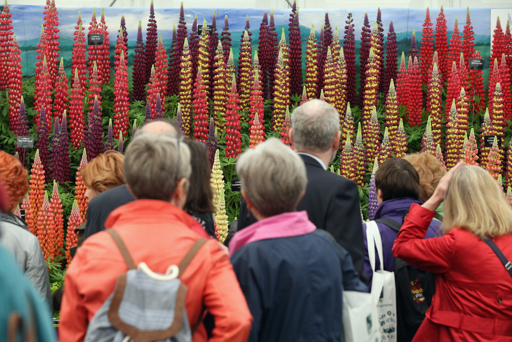 . Visitors admire the plants on display in The Great Pavilion at the RHS Chelsea Flower Show on May 21, 2013 in London, England. The Chelsea Flower Show run by the RHS celebrates its 100th birthday this year.  (Photo by Oli Scarff/Getty Images)