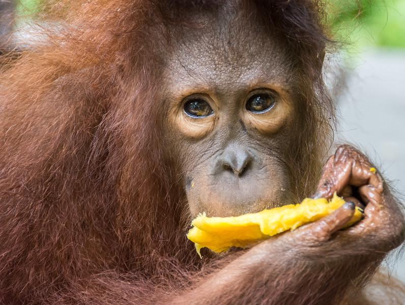 Borneo-2248.jpg