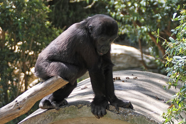 DC Zoo
