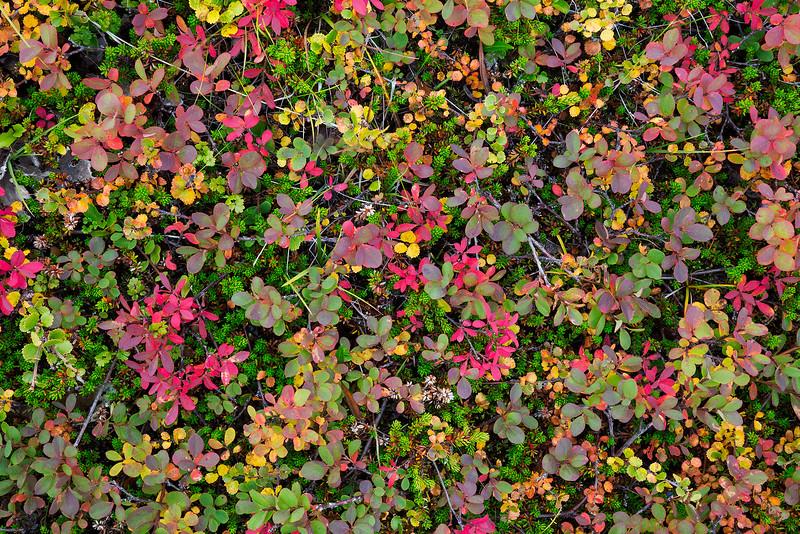 Tiny Autumn