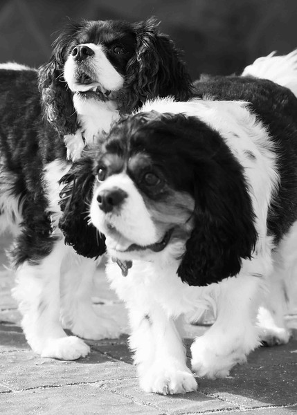 Clifton_Dogs_0091.jpg