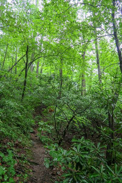 Barnett Branch Trail -- 3,620'