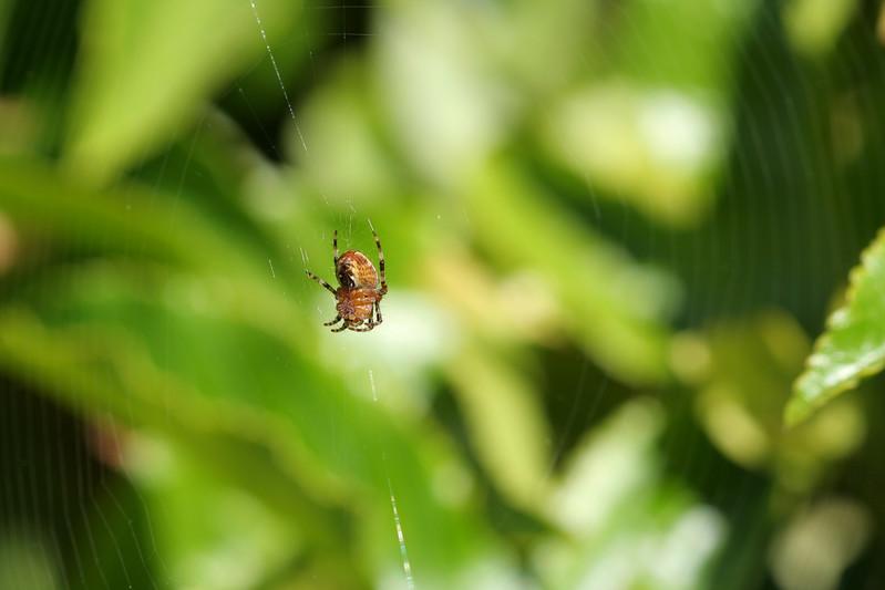0925 Spider.jpg
