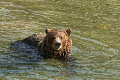 Grizzlies 2012