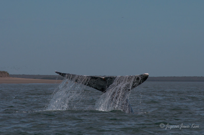 Mexico-Loreto-Whale-2326.jpg
