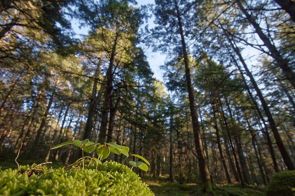 Atlantic Canada Forests