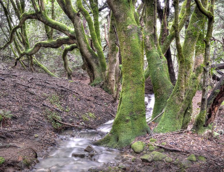The Bay Trees, Sea Ranch, California
