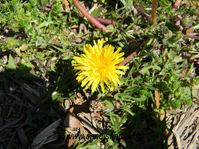 Spring Century 2011-0038.jpg