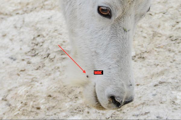 8-01-15 Mountain Goats