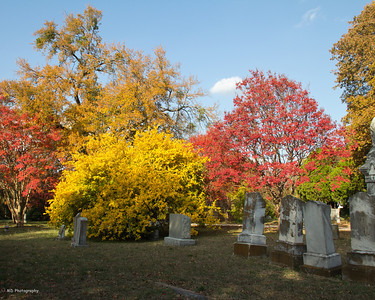 Fall Colors at Greenwood Cemetery