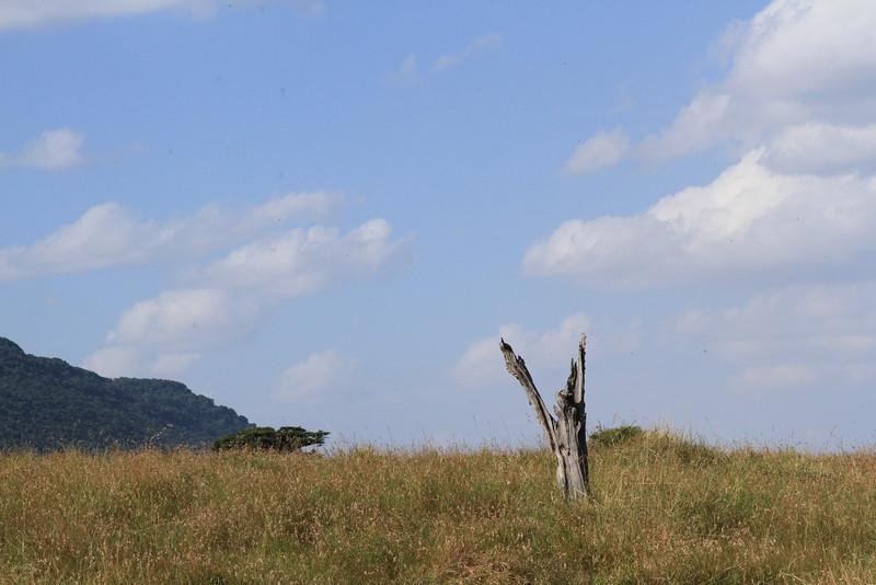 Kenya Part2 '15 017.JPG