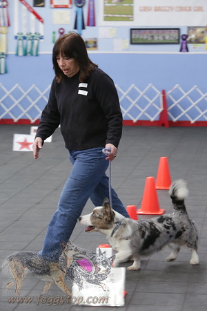 January 2016 Golden Rule School For Dogs WC Rally Trial