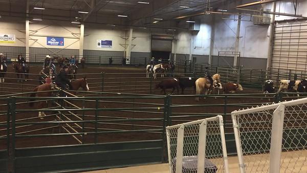 Farm and equine life