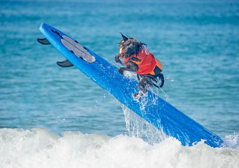 Surfing Dogs-33.jpg
