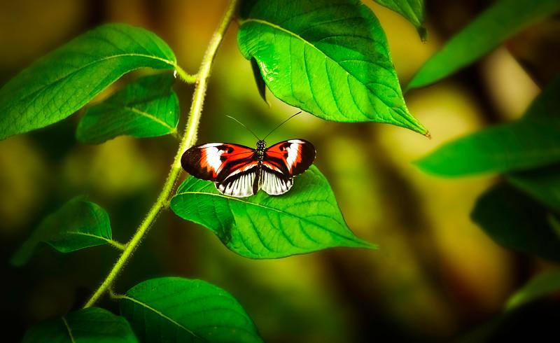 Butterfly-119.jpg