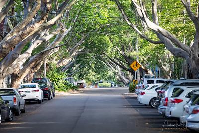 Streets of Paddingtion
