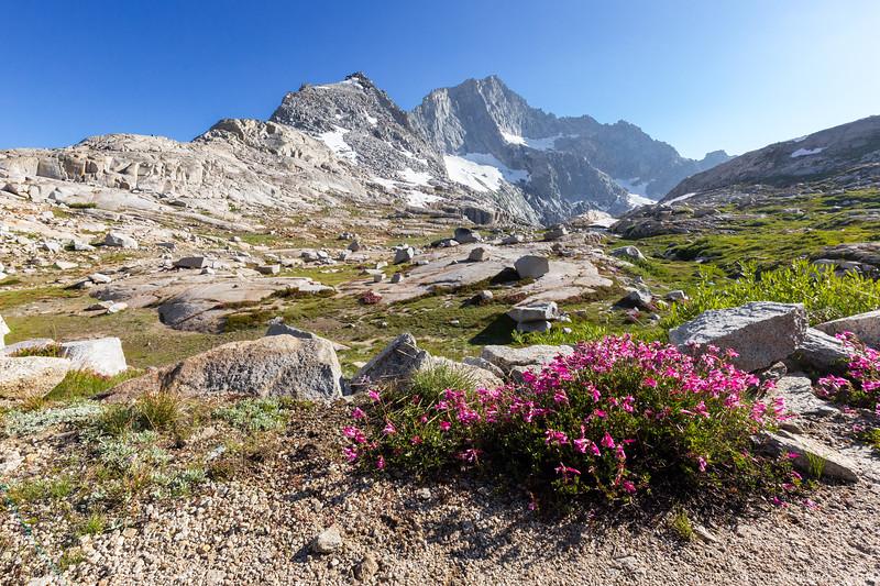 flower sequoia.jpg