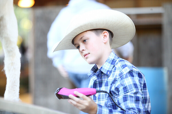 Henry County Youth Livestock Auction