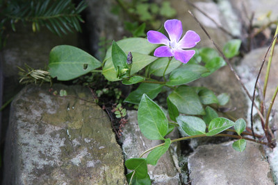 wall flowers project