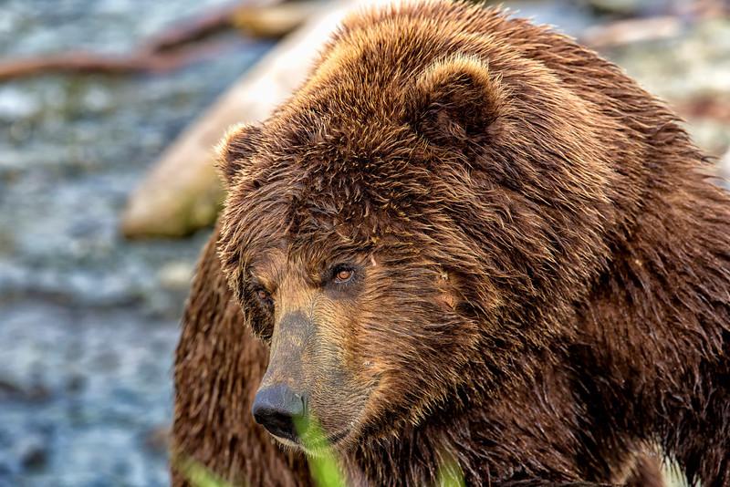 Alaskas_2013_IG3A4355.jpg