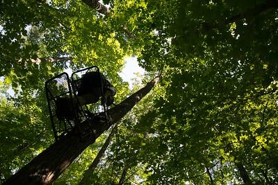 7.17-tree climbing