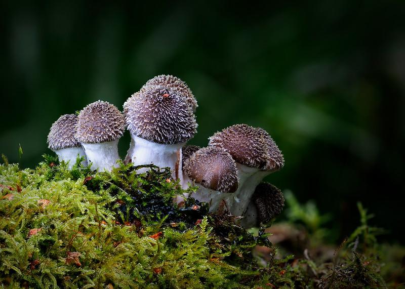 Honey Fungus 20.9.19