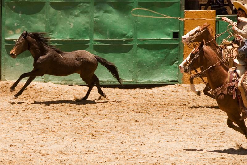 charreada - mexican rodeo