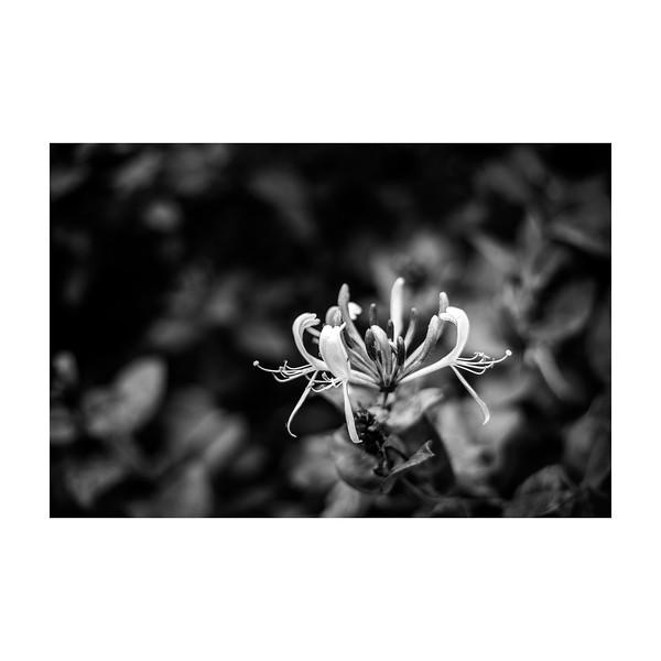 196_Flower_10x10.jpg