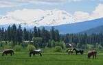 horses 052305 IMG_4696-sm.jpg