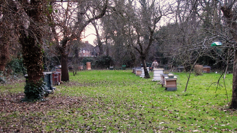 Morden Hall Park - Bee Hives - 2012