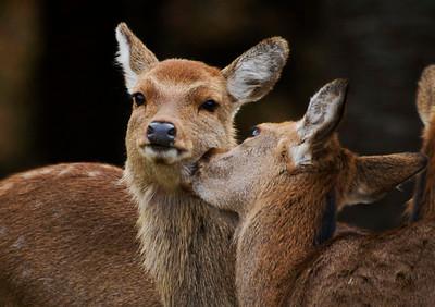 Wildlife in Japan-  בעלי חיים ביפן